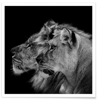 Lion Duo Profile by Lothare Dambreville Poster
