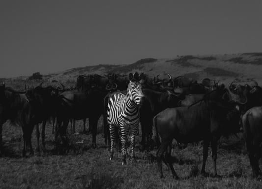 Stand out from the Crowd by Amishpatel