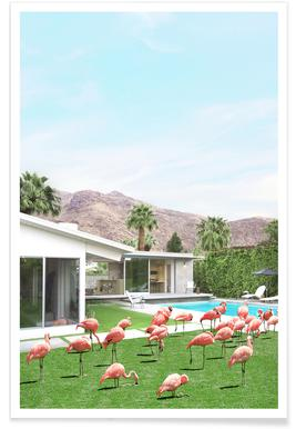 Flamingos in Palm Springs -Poster