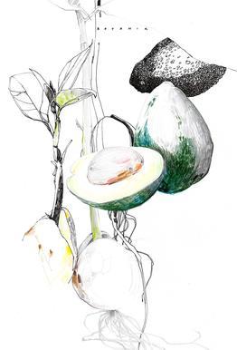 Avocado acrylglas print