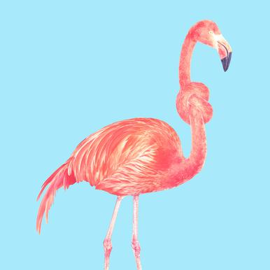 Flamingo with a Big Problem