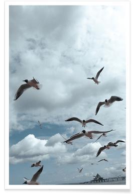 Gulls VII
