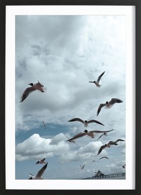 Gulls VII ingelijste print