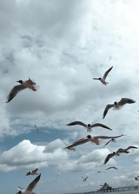 Gulls VII canvas doek