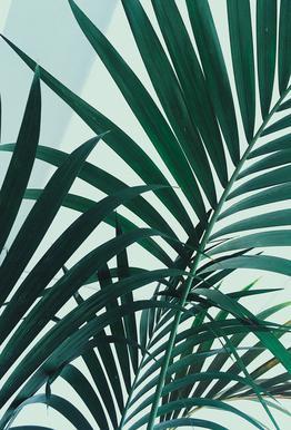 Palm Leaves acrylglas print