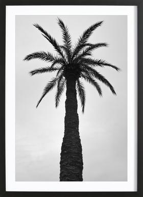 Palm Love ingelijste print