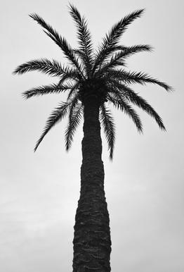 Palm Love Acrylic Print