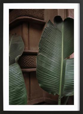 Leaves in Barcelona Framed Print