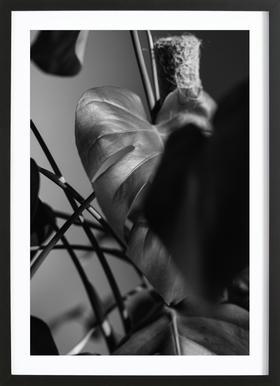Monstera Deliciosa Framed Print