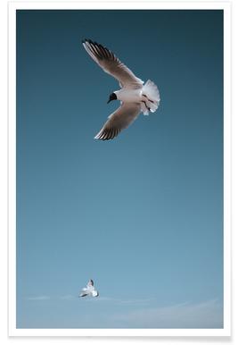 Seagulls I Poster