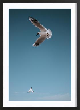 Seagulls I Framed Print