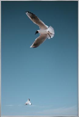 Seagulls I poster in aluminium lijst