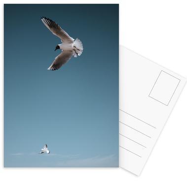 Seagulls I Postkortsæt