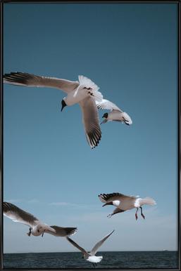 Seagulls II ingelijste poster