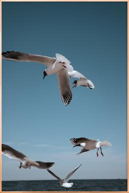 Seagulls II Poster in Aluminium Frame