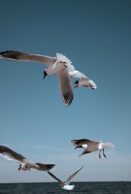 Seagulls II Aluminium Print