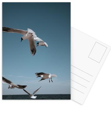 Seagulls II Postcard Set