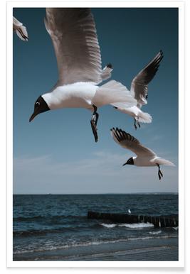 Seagulls VIII Poster