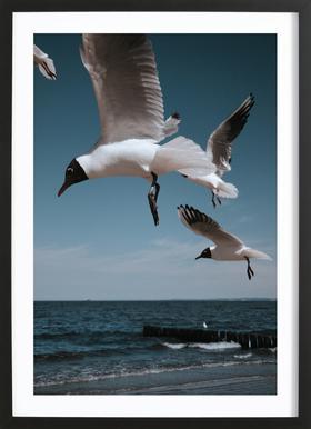Seagulls VIII Framed Print