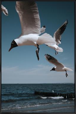 Seagulls VIII ingelijste poster