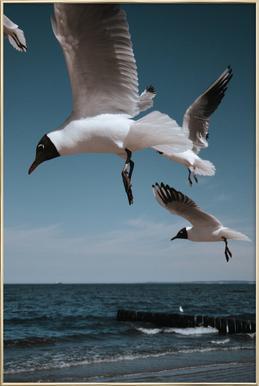 Seagulls VIII poster in aluminium lijst