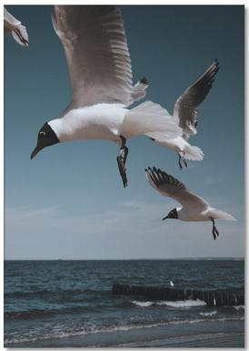Seagulls VIII Notepad