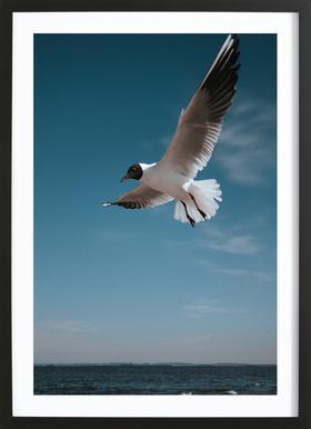 Seagulls IX Framed Print