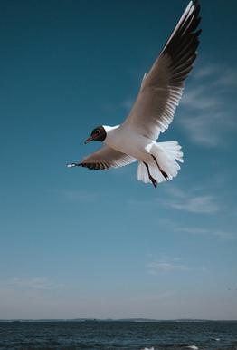 Seagulls IX Aluminium Print