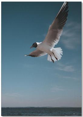 Seagulls IX Notesblok