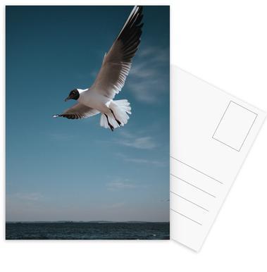 Seagulls IX Postcard Set