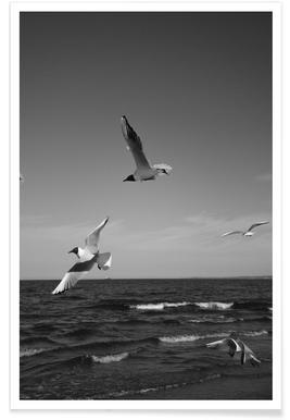 Seagulls III Plakat