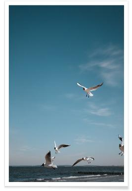 Seagulls IV Poster
