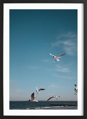 Seagulls IV Framed Print