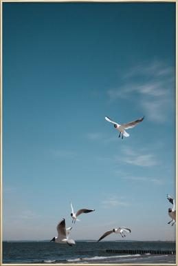Seagulls IV Plakat i aluminiumsramme