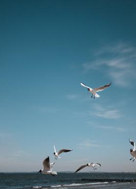 Seagulls IV Lærredstryk