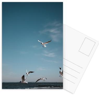 Seagulls IV Postkortsæt