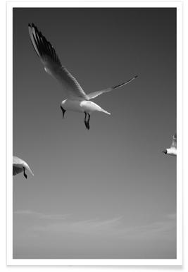 Seagulls V Poster