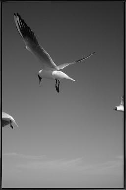 Seagulls V Framed Poster