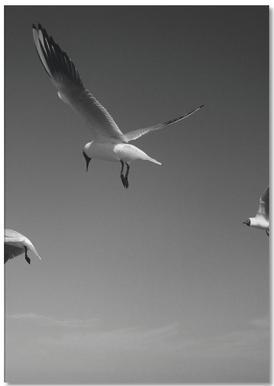 Seagulls V Notepad