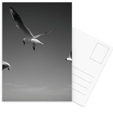 Seagulls V Postcard Set