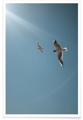 Seagulls VI Plakat