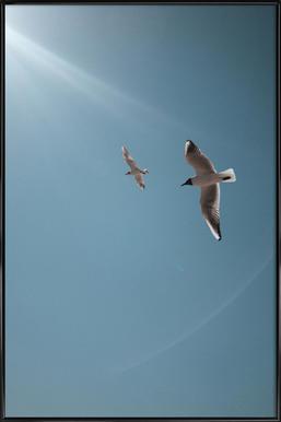 Seagulls VI ingelijste poster