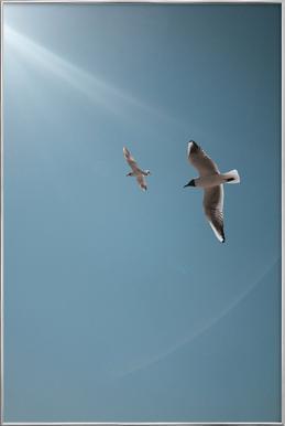 Seagulls VI poster in aluminium lijst