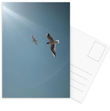 Seagulls VI Postcard Set