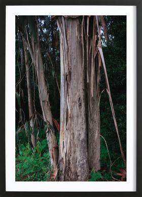 Woods in Portugal Framed Print