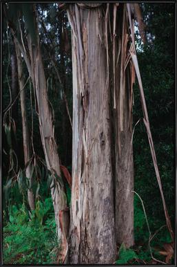 Woods in Portugal Framed Poster