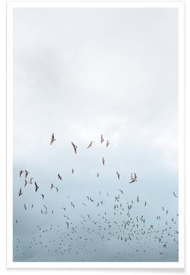 Birds in Porto poster