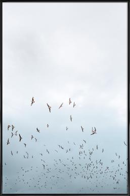 Birds in Porto Framed Poster