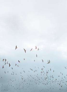 Birds in Porto Canvas Print