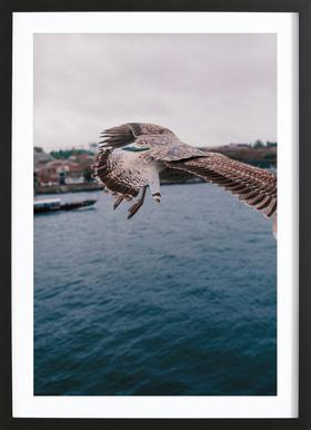 Seaside ingelijste print
